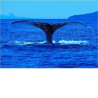 comparison blue whale and argentinosaurus heavy sauropod